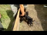 Безжалостная атака собак на человека (VHS Video)