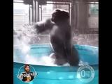 Хорошечный танец в бассейне