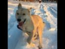 Самая счастливая собака на свете
