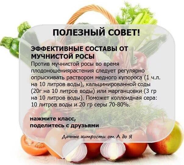 вредители комнатных растений NaMVI72hnEQ