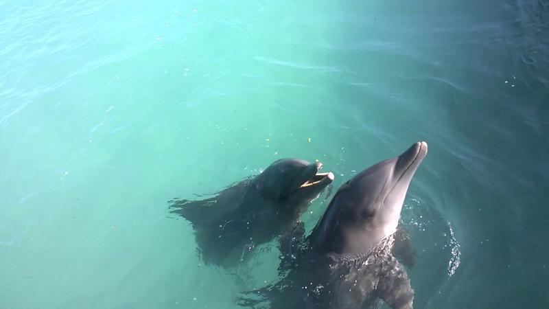 Caribe club princess 4 punta cana delfin