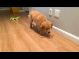 Крадущийся пёс, затаившаяся добыча