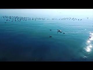 Море, лебеди и уточки Евпатория Крым 23 января 2017