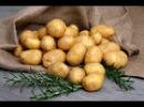 Лучшие сорта картофеля - сорта Удача и Гала