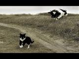Смешные кошки приколы про кошек и котов 2017 #37 Боевые котята и милые котики