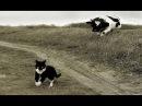 Смешные кошки приколы про кошек и котов 2017 37 Боевые котята и милые котики
