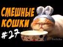 Смешные Кошки ДО СЛЁЗ 2017 Приколы с Котами
