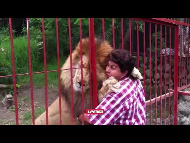 Lion Gives Hug Through Cage