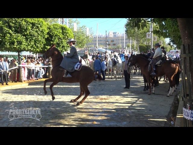 Concurso de Caballistas. Feria de Sevilla 2016.