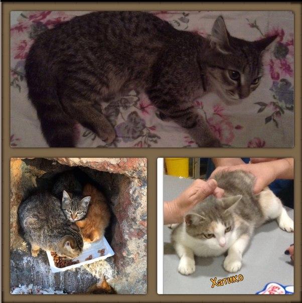 Как вывести глистов у кошки в домашних условиях 863