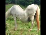 Необычная лошадка 2016
