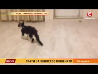 окна новости: 5 лет за убийство котенка © СТБ