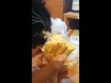 кот ест эклер