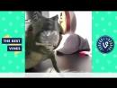 Purplecrumbs - Cocaine Dinosaur Best Vines Compilation - Best Viners September 2015 (online-video-cutter) (1)