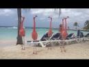 Фламінго на пляжі Кіпру