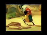 38 Попугаев. Ненаглядное пособие