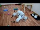 Семь тайских котят и одна коробочка! Когда в кадре все семь котят - вопрос! Тайские кошки это чудо