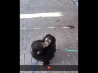 All you need is love - monkeys - hug - chimps