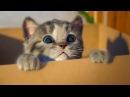 МОЙ Маленький КОТЕНОК СИМУЛЯТОР котика как мультик видео для детей виртуальный питомец ПУРУМЧАТА