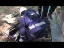 Спасение бездомной собаки Севастополь 18.05.17