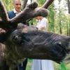 Фотосессии с северными оленями | Праздники
