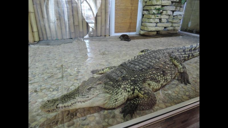 Крокодил дил дил