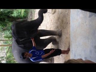 Шоу маленького слоненка » Freewka.com - Смотреть онлайн в хорощем качестве