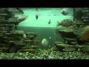 Мой аквариум 26 10 2015