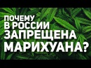 Почему Марихуана запрещена в России