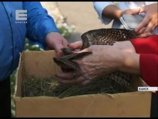 Житель Канска подобрал на трассе птенца козодоя