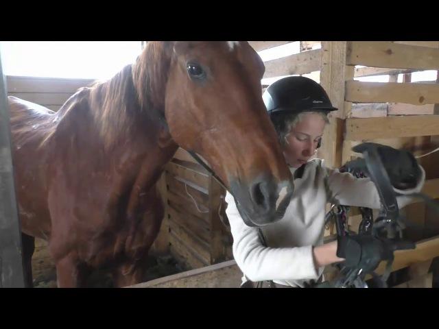 Верховая езда. Одеваем уздечку на лошадь