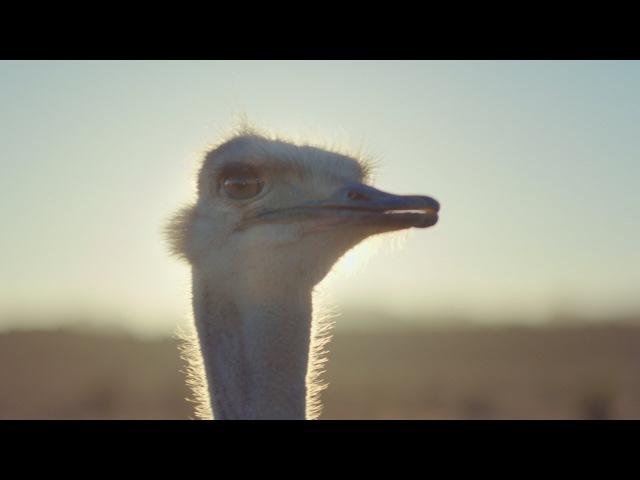 Samsung Official TVC: страус и виртуальная реальность
