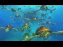 В поисках Немо 3D - восточно-австралийское течение