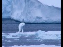 ЖУТЬ .Kрионы. Чудовища Антарктиды. 2017 Kryons. The monster of Antarctica. 👹