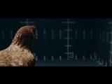 Реклама Мерседес танцующие Курицы Mercedes-Benz commercial dancing chicken Stabi