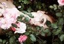 Наташа Калашникова фото #14
