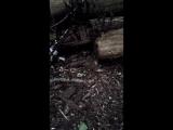 мышки в Лосином острове