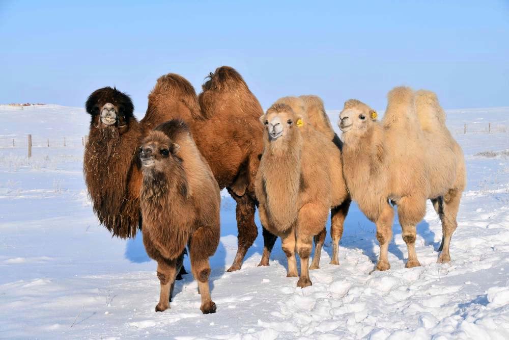 Обитатели пустынь готовы и к более серьезным зимам