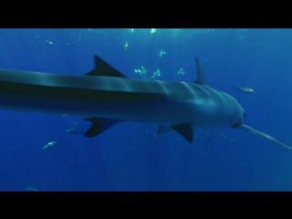 Большое путешествие вглубь океанов 3D: Возвращение (2009)