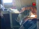 Кошка, выжившая после крушения рейса Томск-Сургут спустя три недели вернулась д ...