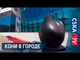 Кони в городе: Курск