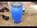 Бункерная кормушка из бочки Опыт эксплуатации Птицеводческое хозяйство Маруся и Медведь