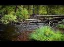 Лесной стороною - Лесная речка Релакс видео