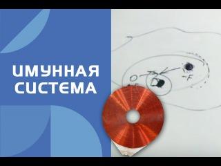 Катушка Мишина (вихревая медицина)