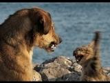 Кот спасает маленького мальчика-хозяина от нападения злобной собаки