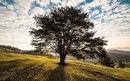 Если вам не нравится то место, где вы находитесь — смените его, вы же не дерево.