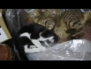 Смішні котики
