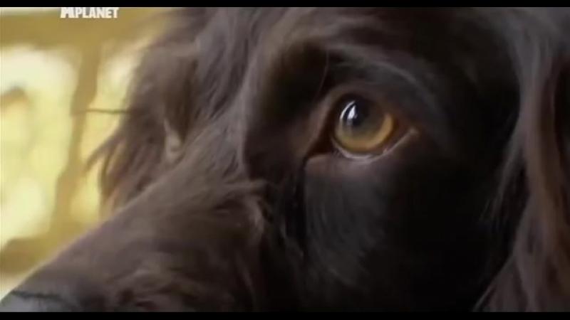 Введение в собаковедение 101 Dogs Часть 21 Animal Planet