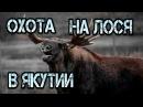Охота в Якутии на лося.