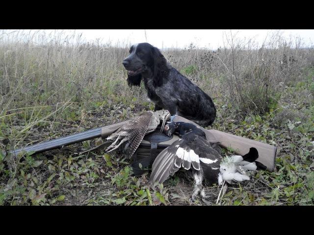 Охота на пернатых с русским спаниелем